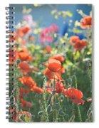 Evening Lights The Poppies Spiral Notebook