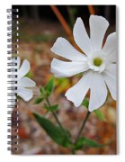 Evening Lychnis Spiral Notebook