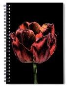 Evening Red Spiral Notebook