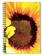 Evening Sun Spiral Notebook
