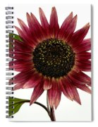 Evening Sun Sunflower 2 Spiral Notebook