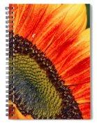 Evening Sun Sunflower Spiral Notebook