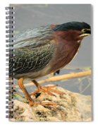 Everglades Green Heron Spiral Notebook