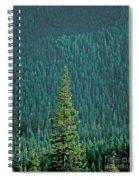 Evergreen Trees Spiral Notebook