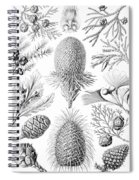 Examples Of Coniferae From Kunstformen Spiral Notebook