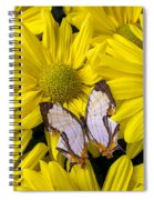 Exotic Butterfly Spiral Notebook