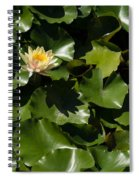 Exotic Colored Waterlilies In The Hot Mediterranean Sun Spiral Notebook