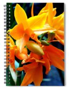 Exotic Orange Spiral Notebook