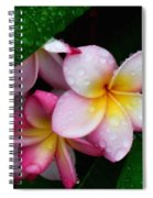 Exotic Tears  Spiral Notebook