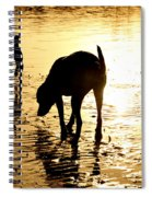 Exploring At Sunset Spiral Notebook
