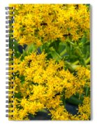 Exploring Goldenrod 6 Spiral Notebook