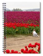 Exploring The Tulip Fields Spiral Notebook