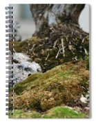 Exposed Roots Spiral Notebook