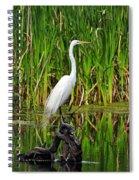 Exquisite Egret Spiral Notebook