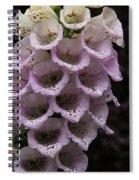 Exquisite Foxgloves Up Close Spiral Notebook