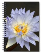 Exquisite Lavender Waterlily Spiral Notebook
