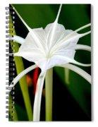 Exquisite Spider Lily Spiral Notebook