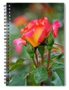 Eye Candy Spiral Notebook