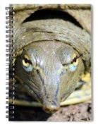 Eye Liner Turtle 8494 Spiral Notebook