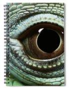 Eye Of A Common Iguana Iguana Iguana Spiral Notebook
