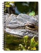 Eye Of The Alligator Spiral Notebook