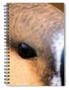 Eye Of The Gander Spiral Notebook