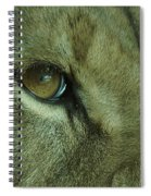 Eye Of The Lion Spiral Notebook