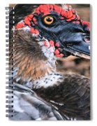 Eye Of The Muscovy Duck Spiral Notebook