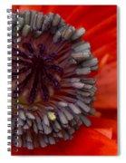 Eye Of The Poppy Spiral Notebook