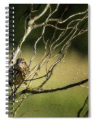 Eye On The Sparrow Spiral Notebook