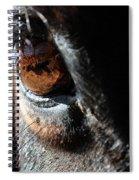 Eyeball Reflection Spiral Notebook