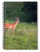 Eyeing A Mate Spiral Notebook