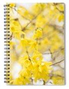 Fabulous Forsythia Spiral Notebook