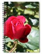 Fabulous Red Rose Spiral Notebook