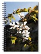 Facades And Fruit Trees - The Church And The Plum Spiral Notebook