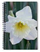 Face Of A Daffodil Spiral Notebook