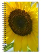 Face To Face With A Sunflower Spiral Notebook