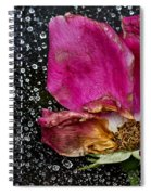 Faded Rose - Youth And Age Spiral Notebook