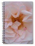 Faintly Pink - Rose Spiral Notebook