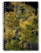 Fall Aspen Spiral Notebook