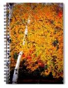 Dazzling Birch Spiral Notebook