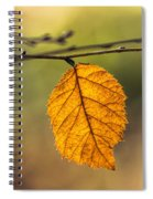 Leaf In Fall Color Spiral Notebook