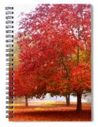 Fall Colored Trees Spiral Notebook