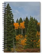 Fall Colors 2 Greeting Card Spiral Notebook