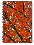 Fall Colors 2014-10 Spiral Notebook