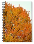 Fall Colors 2014-11 Spiral Notebook