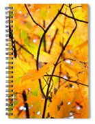 Fall Colors 2014-7 Spiral Notebook