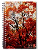 Fall Colors Cape May Nj Spiral Notebook
