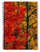Fall Colors Dp Spiral Notebook