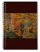 Fall Colors Greeting Card Spiral Notebook